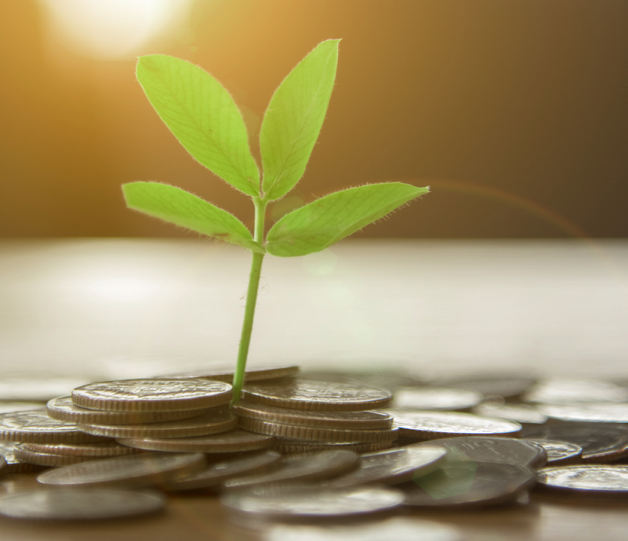 Young plant emerging from coins